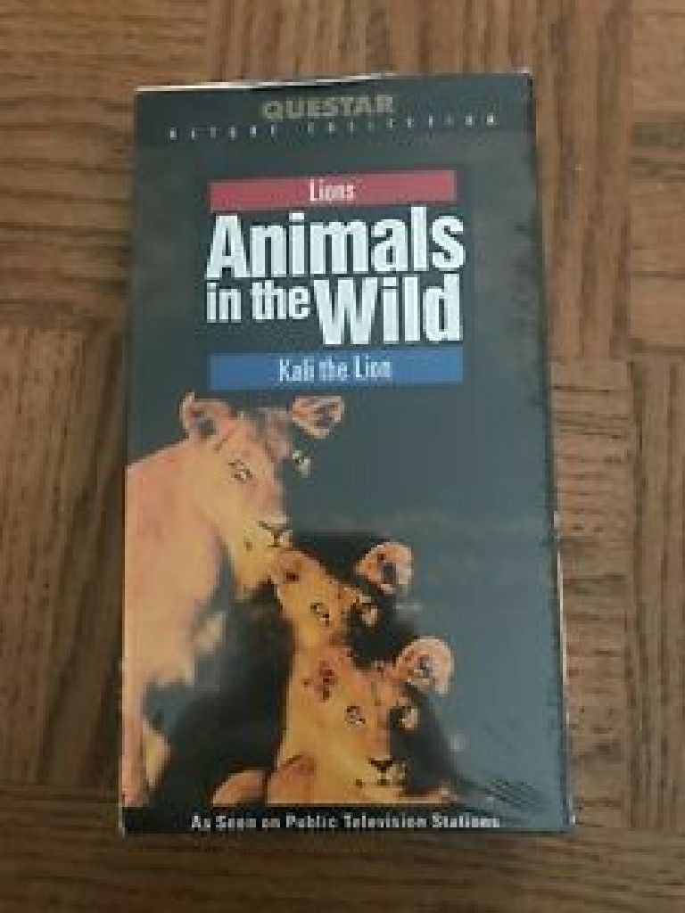 Animals In The Wild Kali The Lion -  cover