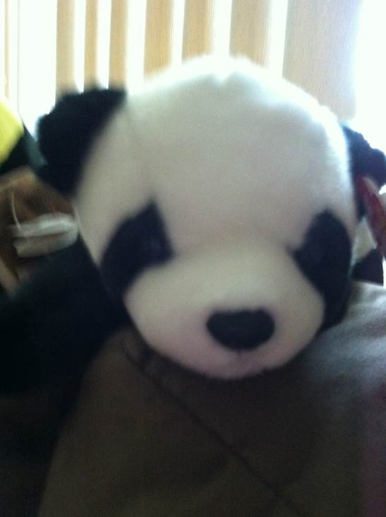 Panda Beanie Baby front image (front cover)