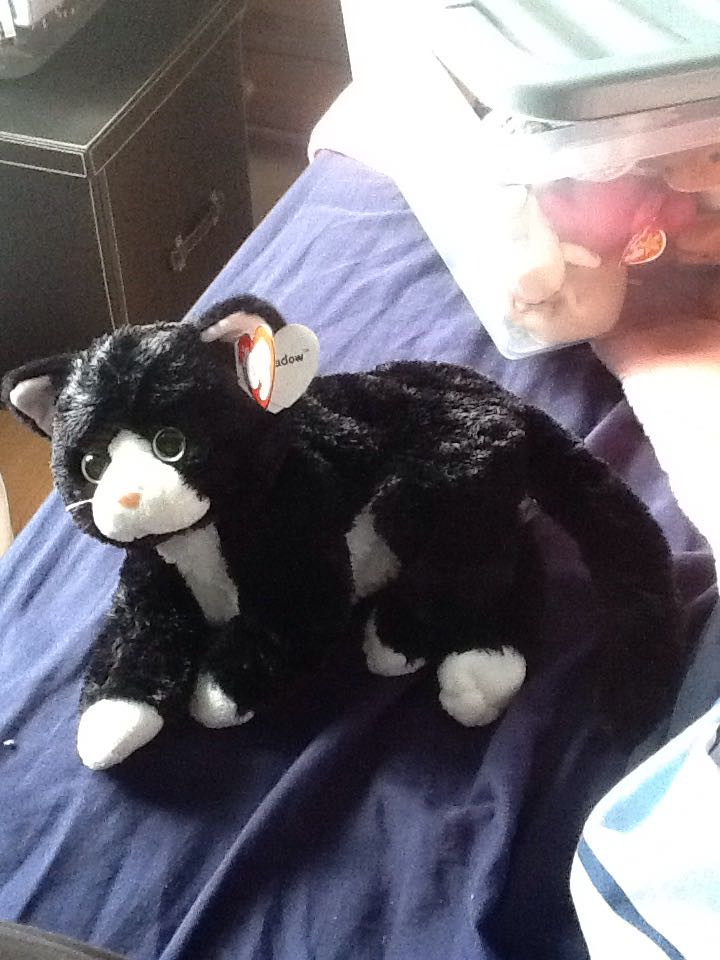 256736575ec Shadow the Cat (TY Beanie Buddy) Beanie Baby - Black - from Sort It Apps