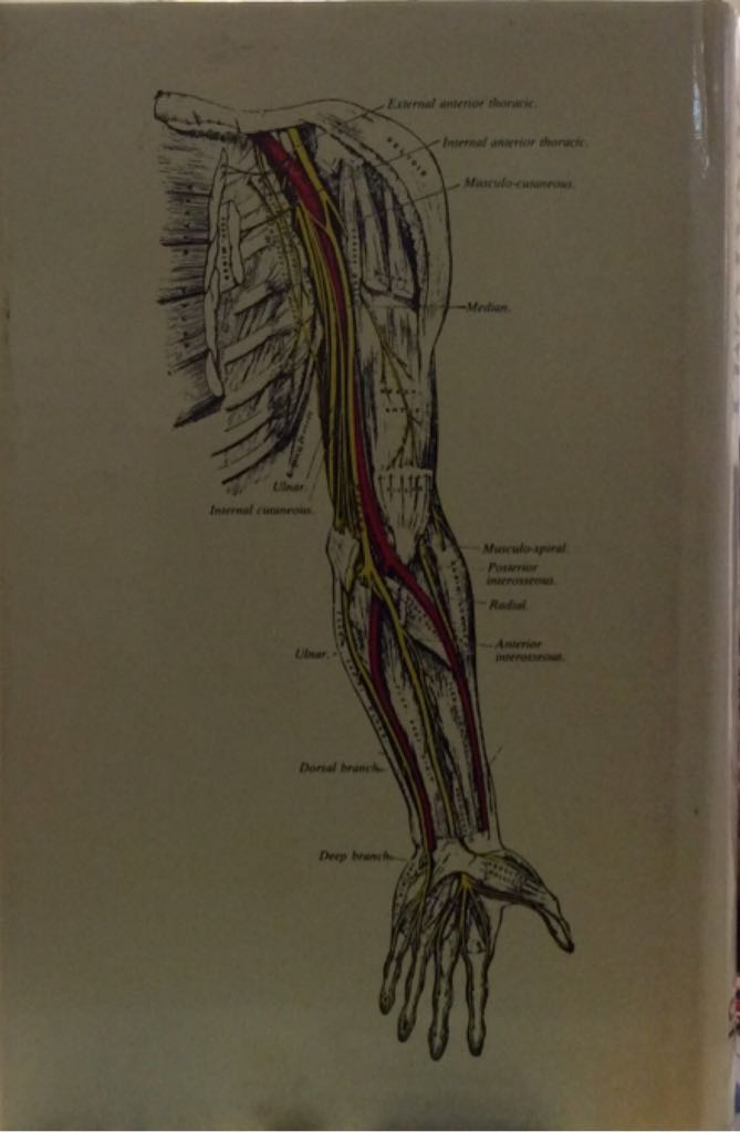 Gray's Anatomy, The Concise Book - Savvas Publishing back image (back cover, second image)